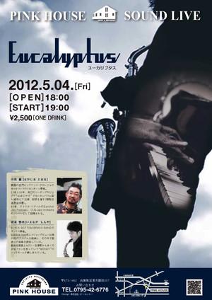 12504_eucalyptus